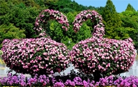 국화꽃으로 만든 예술작품
