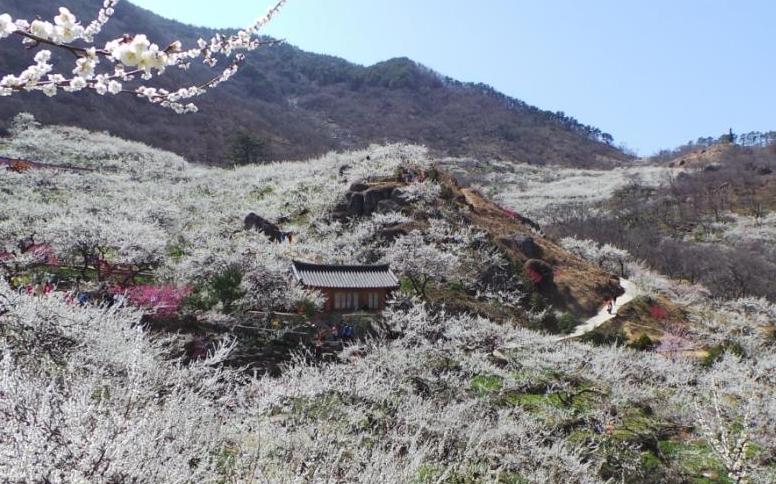 풍년제가 준비중인 일본 타가타 신사 풍경