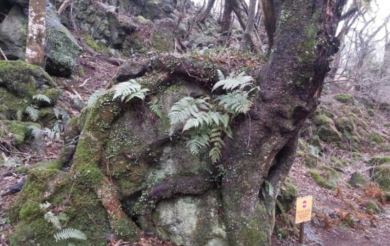 제주 에코랜드의 곶자왈 숲길