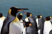 남극대륙의 눈물 사라지는 펭귄 서식처