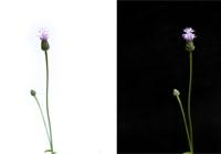 [서소문 사진관] 잡초의 흑·백 편지