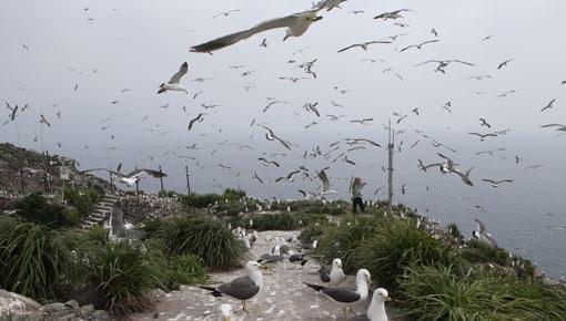 섬 자체가 천연기념물… 괭이갈매기가 만드는 비경