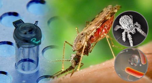 콜레라·A형간염·옴 기승 폭염이 잠 깨운 후진국 전염병