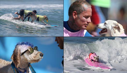 파도 위에서 점프까지…반려견 서핑 대회