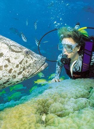 오색빛깔 산호초와 원시림 품은 꿈의 여행지