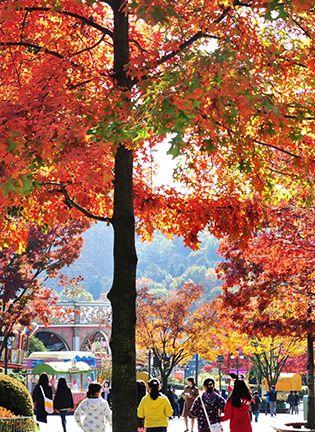 가을 4色 힐링 단풍 코스