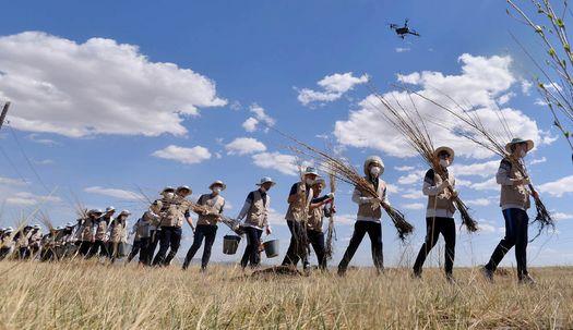 몽골 사막에서 14년째 나무심기