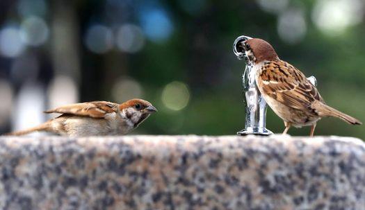 참새도 목마르다…오늘도 한여름 무더위