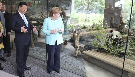 中서 온 판다,시진핑ㆍ메르켈에 눈길한번안줘