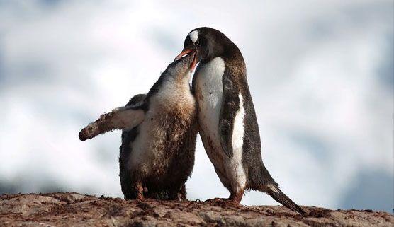 온난화로 파괴된 남극… 펭귄도 사라져가
