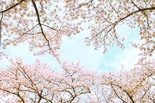 싱그러운 제주의 봄이 만개한다