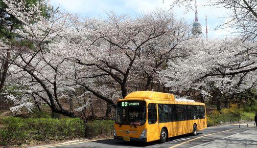 서울 벚꽃 명소 10선... 어디로 떠나볼까?