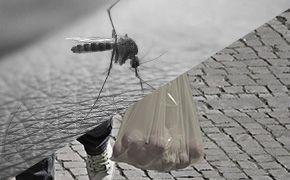 [톡톡에듀-카드뉴스]모기-비닐봉투... 무엇이 떠오르나요?