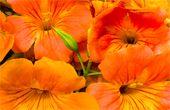 무더위에도 피고 지고 하늘마저 능멸하는 꽃