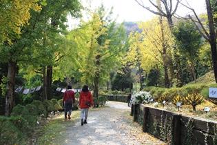 세종 베어트리파크 '단풍낙엽 산책길' 오늘부터 개방
