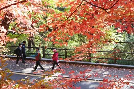 도심속 가을 정취 물씬. 서울 남산의 가을