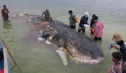 죽은 고래 뱃속, 1000개 플라스틱 쓰레기 나와