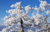 새파란 하늘 아래 하얀 눈꽃 핀 지리산