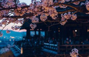 일본 편도가 5만원?  4월 꽃놀이 항공권 뜬다