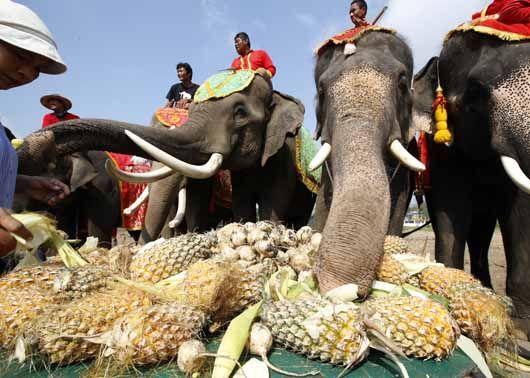 태국 '코끼리의 날' 무제한 뷔페식 제공