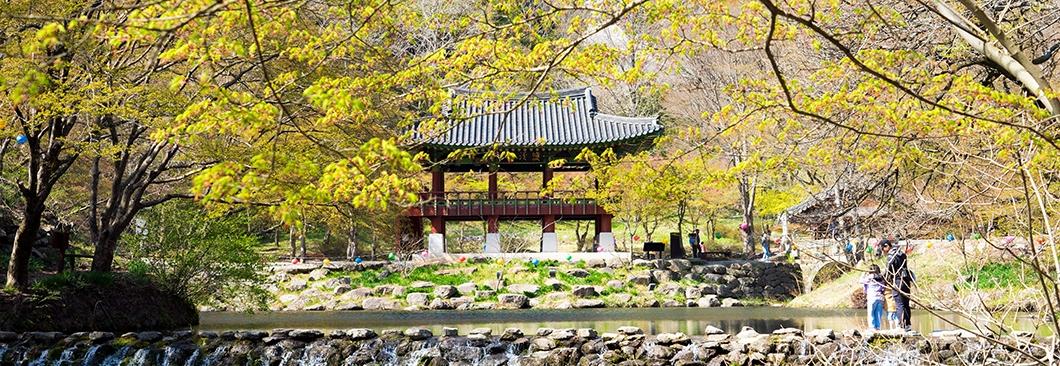 전남 장성 봄 숲 여행