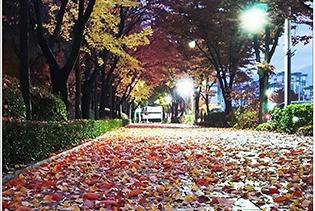가을이 가네