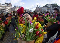 빨강 노랑 보라 …따뜻함이 피어나는 네덜란드 튤립 데이