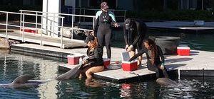사람의 놀이 위해 돌고래를 가두는 것, 폭력 아닐까