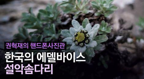 한국의 에델바이스 '설악솜다리'를 찾아서