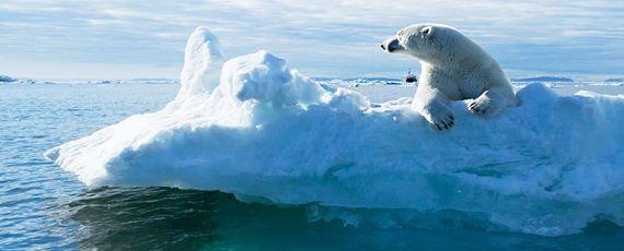 북극곰이 어떻게 되든 사실 무슨 상관이야?