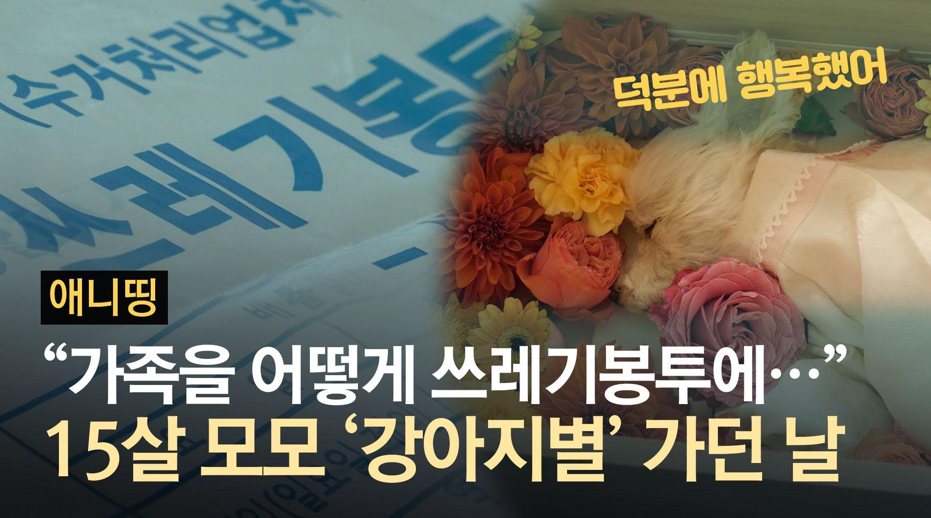 """""""가족을 쓰레기봉투에 버려요?""""···15살 모모 '강아지별' 가던날"""