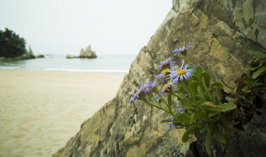 바다·가을·기다림과 가장 잘 어울리는 꽃 해국