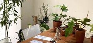 '인스타 감성' 저격해 핫플레이스된 식물 카페