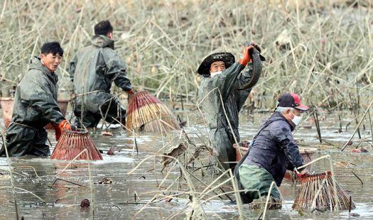 펄떡 거리는 가물치 손맛, 겨울철 농촌의 전통 레저 '가래치기'