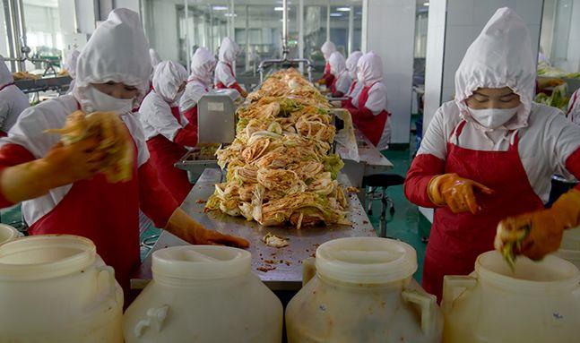 외신이 공개한 북한의 김장김치 공장, '콩나물 물김치'도 있다