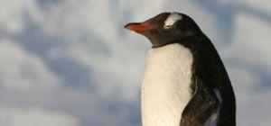 '펭수'는 남극에만 산다? 적도에도 있다