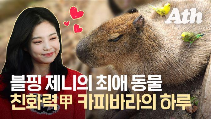 [애니띵] 블랙핑크 뮤비까지 등장한 친화력甲 카피바라