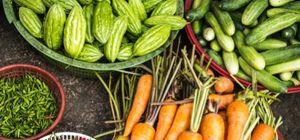 도심서 농사짓기…도시농사꾼이 늘어난다
