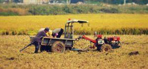 부모 농사일 도우려 직장 때려치고 시골 온 사위
