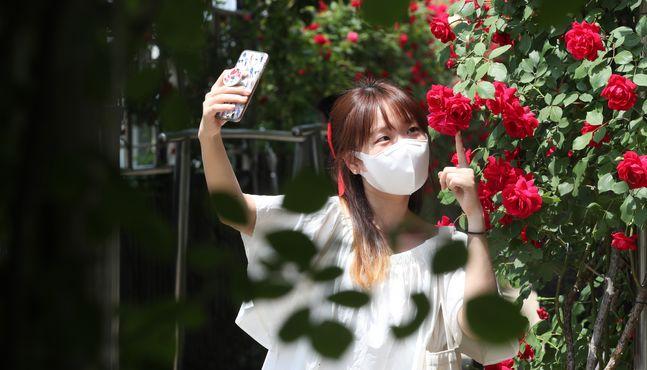 [이 시각]'꽃이 이뻐, 내가 이뻐' 로즈데이 맞아 서울장미축제 눈길